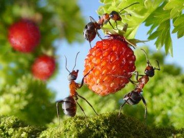 Какой вред наносят муравьи участку