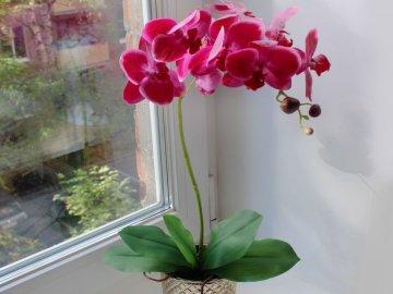 Орхидея: описание и сорта