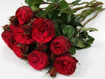 Особенности выращивания пионовидной розы