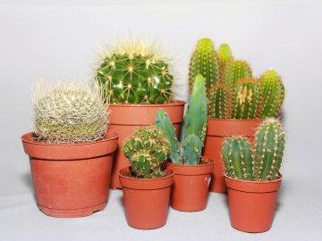 Общее описание кактусов
