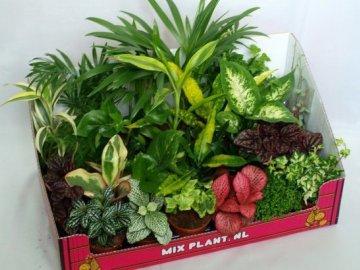 Особенности ухода за цветами Плант микс