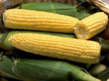 Сахарная кукуруза: описание и полезные свойства