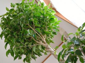 Описание и условия выращивания