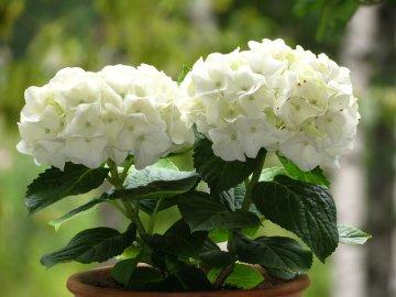 Описание цветка и лучшие сорта
