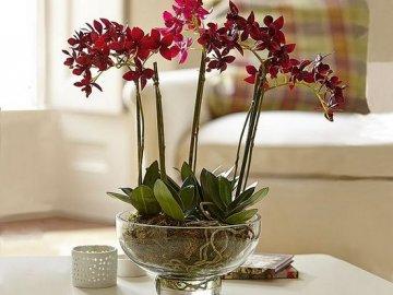 Особенности комнатного цветка