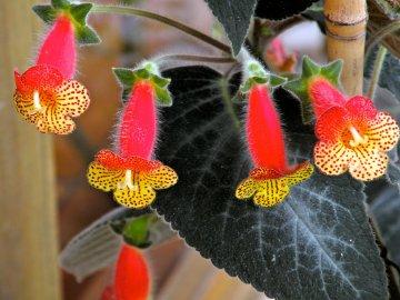 Особенности строения цветка