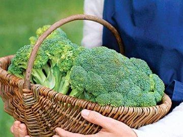 Особенности брокколи как одного из видов капусты
