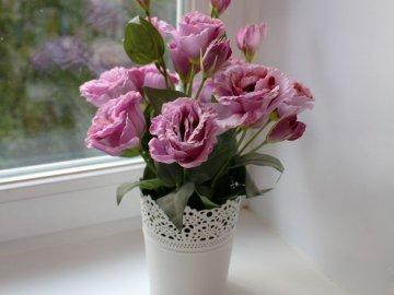 Характерные особенности комнатного цветка