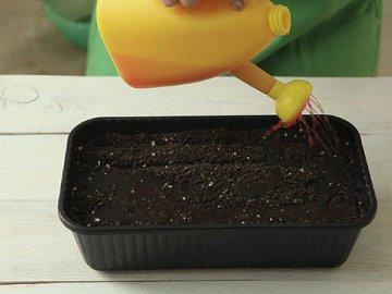 Способы выращивания из семян