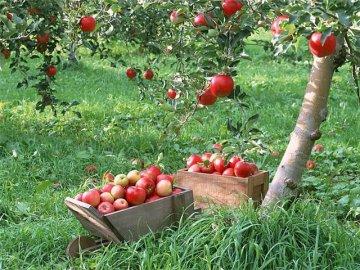 Как обеспечить обильное плодоношение