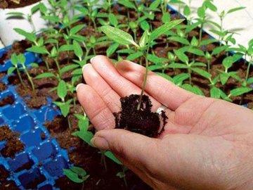 Подготовка почвы к высадке семян