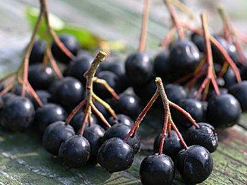 Выращивание и посадка черноплодной рябины