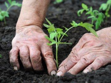 Как сажать рассаду на постоянное место