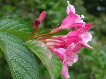 Особенности высадки растения