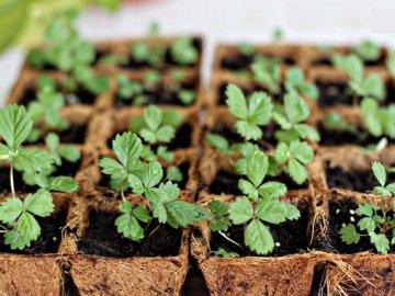 Подготовка семян и почвы для посадки