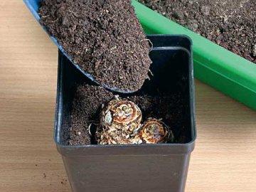 Выбор горшка и почвы