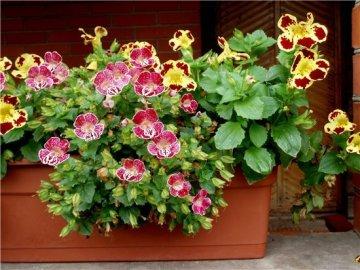 Особенности в уходе за растением
