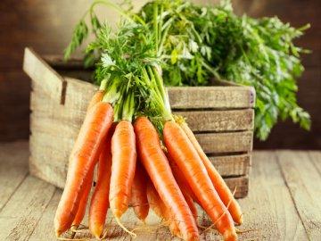 Лучшие семена моркови