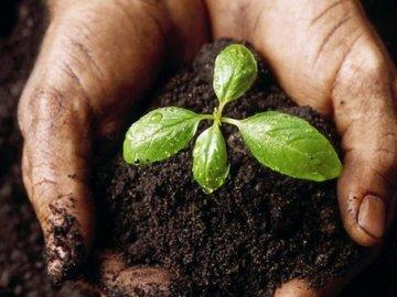 Что растения получают из почвы