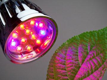 Фито лампы – специально разработанные для растений