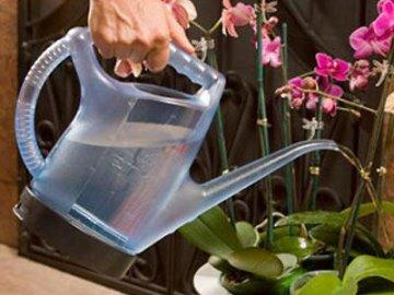 Обеспечение правильного ухода за цветком