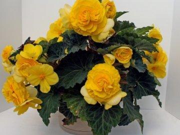 Создание условий для выращивания цветка