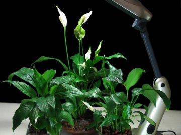 Какие растения нуждаются в подсветке