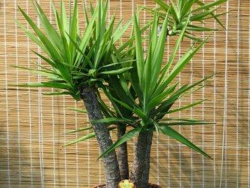 Условия выращивания декоративного растения