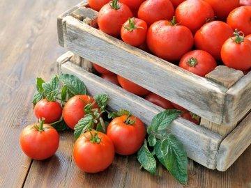 Сорта помидор для теплиц