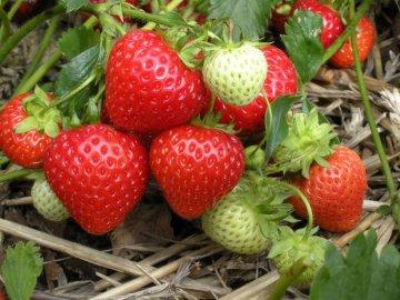 Создание условий для выращивания ягоды
