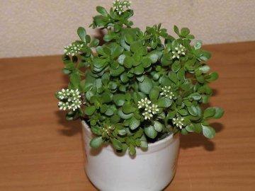 Правила ухода за растением в период появления цветов
