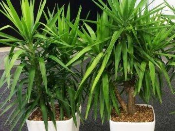 Основные правила ухода за растением
