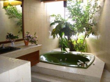 Создание условий для комнатных цветов в ванной
