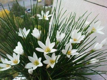Обеспечение благоприятных условий для роста