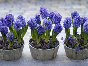 Что делать сразу после цветения