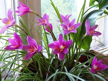 Какие нужны условия для цветка?