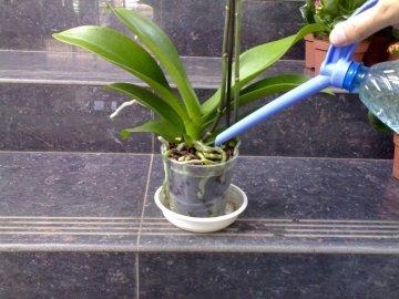 Чем можно удобрять орхидею?