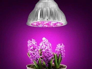 Фитолампы для цветов