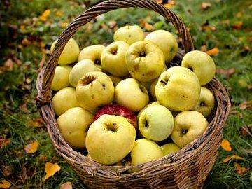 Летние яблони для Подмосковья