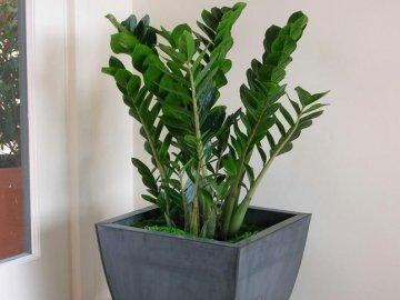 Какие условия нужны растению?