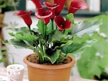 Условия для содержания цветка