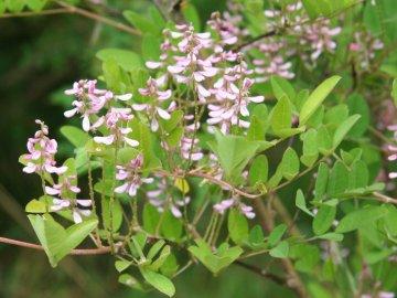 Условия выращивания растения