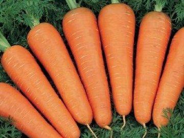 Описание моркови
