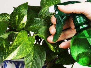 Химические вещества для борьбы с мучнистым червецом