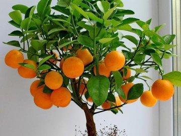 Как правильно выращивать дерево из косточки?