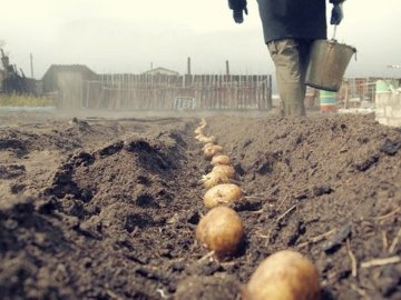 Гербициды для картофеля: какие бывают