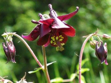 Разновидности этого прекрасного растения