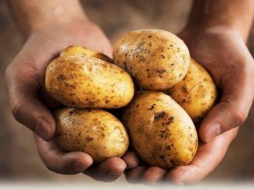 Лучшие сорта картофеля: виды и описание