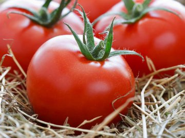 Скороспелые сорта помидор: виды и описание