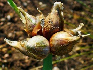 Борьба с болезнями, вредителями огородного растения